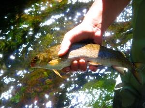 White fish!